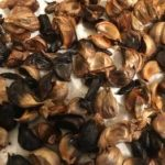 Easy and Efficient Way to Make Black Garlic and Bellflower