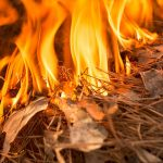 Oregon Bootleg Wildfire Adds onto Climate Change Concerns