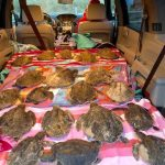190 Sea Turtles Freeze to Death on Thanksgiving Day