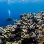 All Coral Reef will Die in 12 Years with 1.5 Degrees Celsius Increase in Temperature
