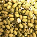 How Mung Bean is a Superfood